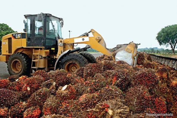 Weaker q-o-q, y-o-y performances seen for 1Q in plantation sector