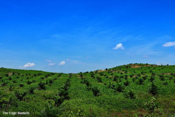 Malaysia plantation stocks to gain on palm oil price bottom: UOB