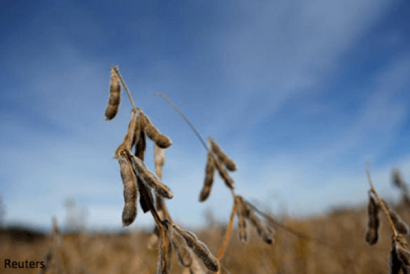 Soybean prices hit 8-day high before edging lower