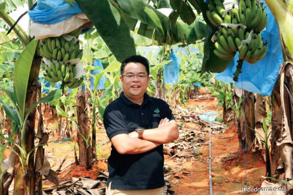 Agriculture: Going bananas!