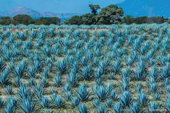 Reasons to visit Guadalajara now