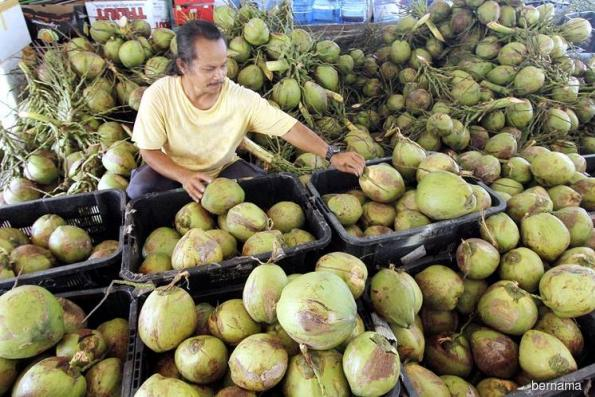 Export of coconuts, coconut products amounted to RM974 mil last year