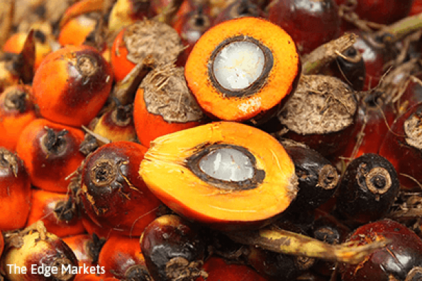 Palm oil may drop more towards RM2,509