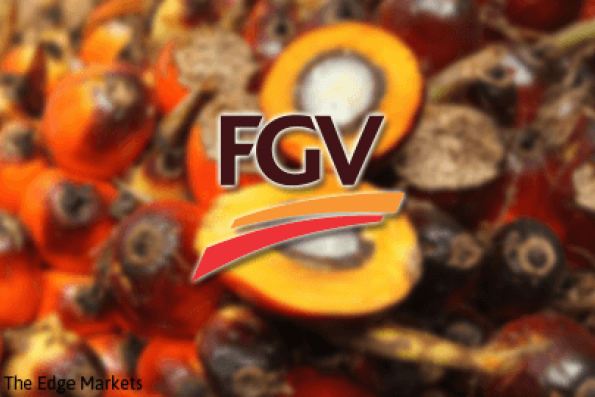 FGV continues to climb buoyed by favourable factors