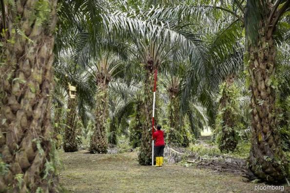Indonesia threatens to ban European goods as palm row escalates