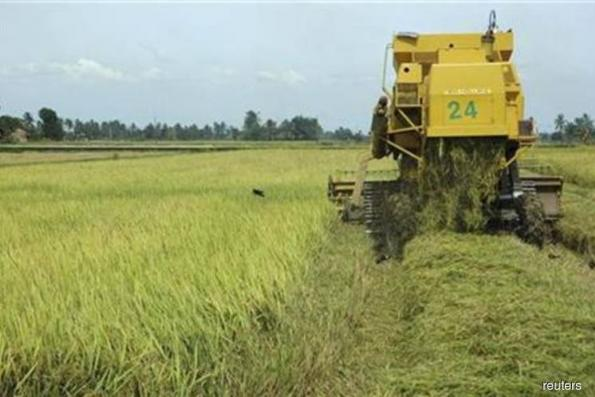 Paddy farmers calls on new govt to raise subsidies
