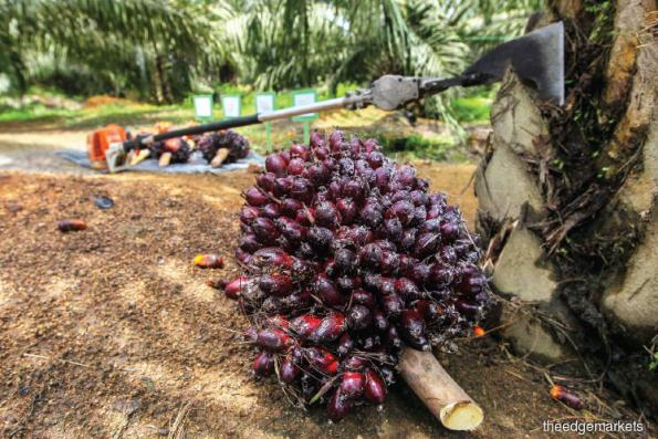 M'sia palm oil inventory up 1.3% in Feb, CPO production down 11.1%
