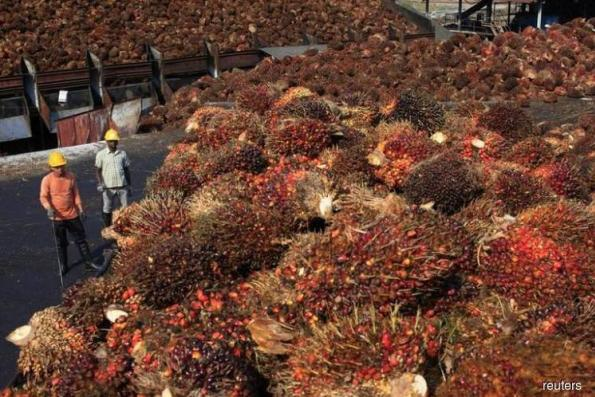 Indonesia kicks off palm oil replanting to boost yields