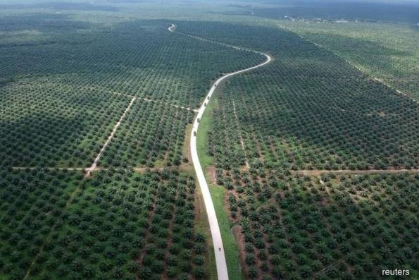 Indonesia defends palm oil after EU targets 2030 phase-out in road fuel