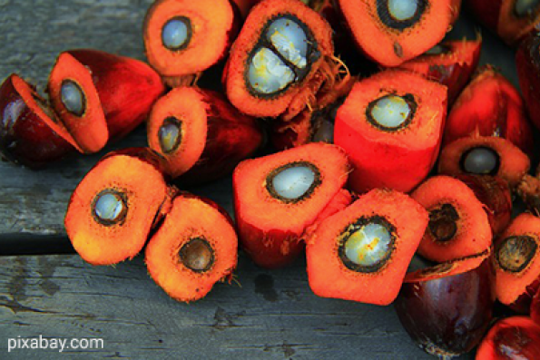 Palm oil may rise to 3,219 ringgit