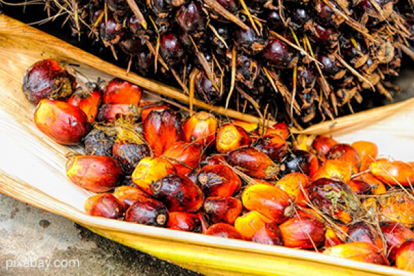 Palm oil may revisit Feb 28 low of 2,723 ringgit