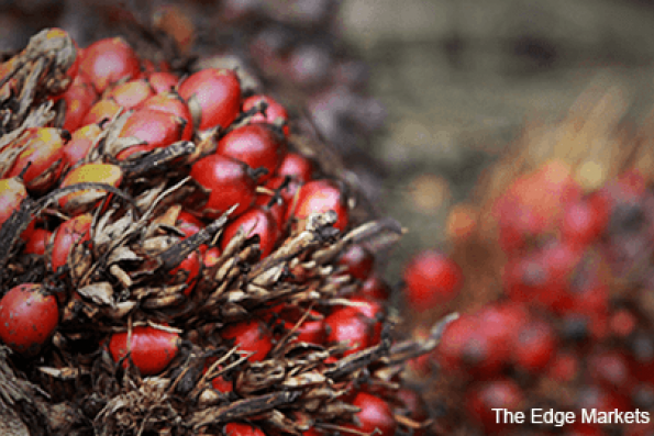 Palm oil sales from top grower dropping first time since '08