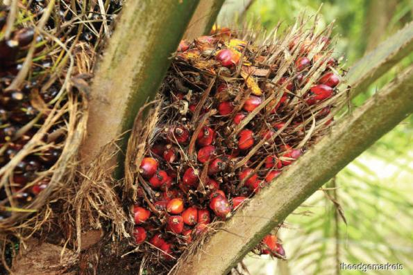 Malaysia palm oil inventory up 1.3% in February