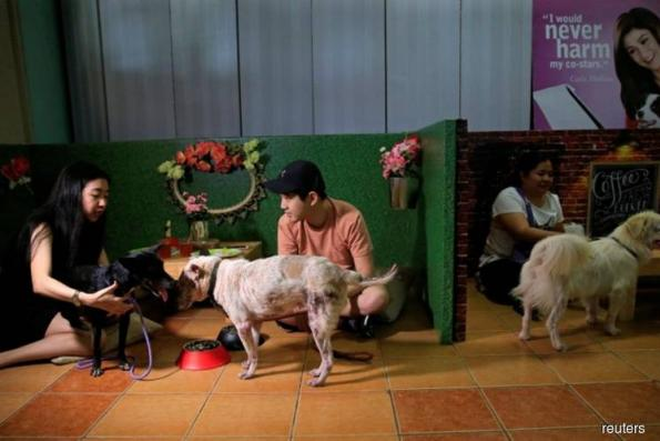 Lonely at Valentine's? Philippines offers pet lovers dates with dogs