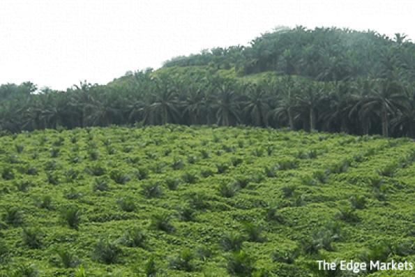 Plantation stocks plunge on low CPO forecast