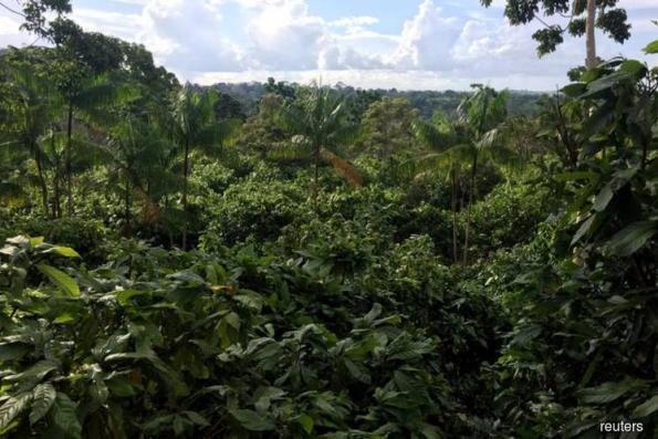 Unmapped roads raise risk to Southeast Asian rainforests — study