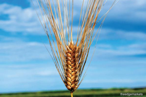 Cover Story: Sowing Seeds For The Future