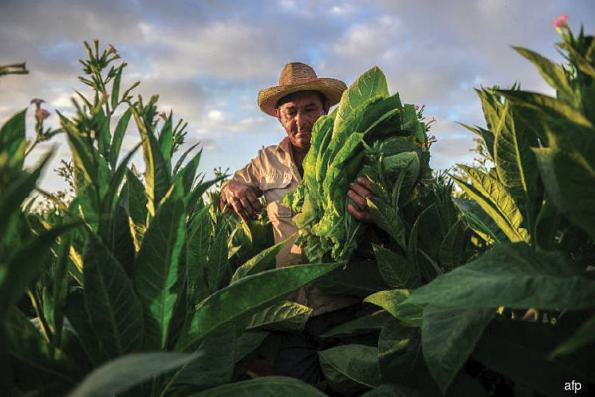 Cuban cigars: a treasure from Havana to Beijing