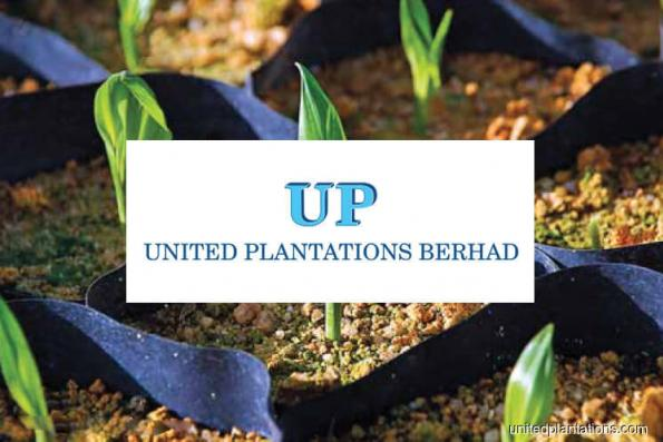 United Plantations 3Q profit up 18.8%, declares dividends
