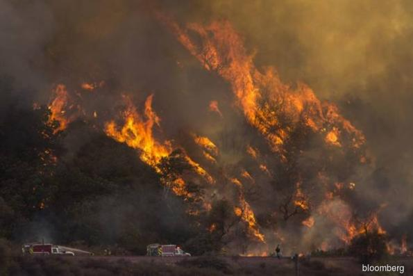 Trump Team Blames Wildfires on Environmentalists, Sparking a Backlash
