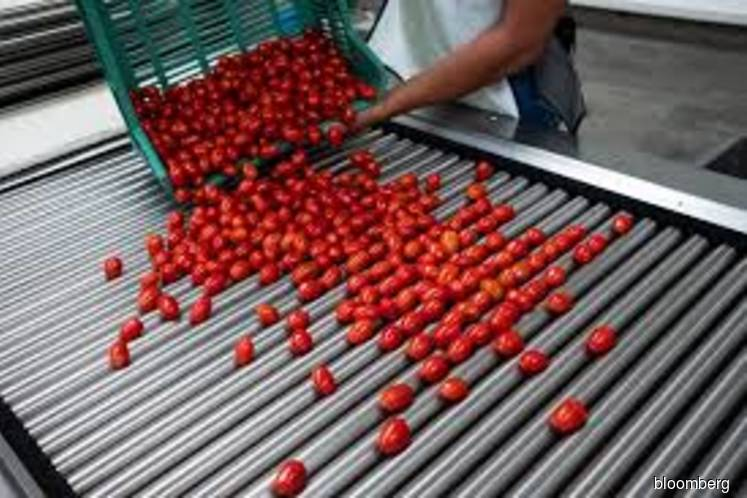 Tomato trade war eases as U.S. agrees to end Mexico tariffs
