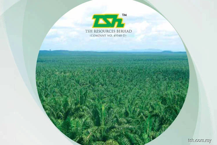 Sabah's plantation ops suspension unlikely to impact TSH