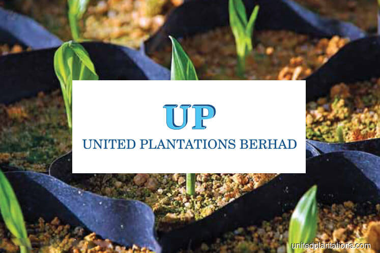 United Plantations 2Q net profit falls 13% on lower revenue